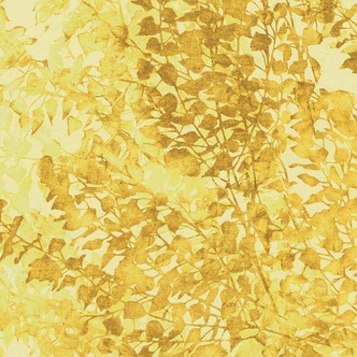 PIOPPO GOLD 02